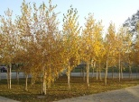 Fotovijest: Jesen u Belom Manastiru
