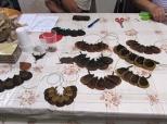 Šesta likovno-kreativna radionica u Bolmanu