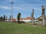 Beli Manastir: Oštro kresanje drvoreda (III)
