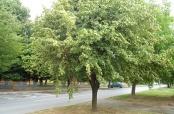 Fotovijest: Zelenilo u Školskoj ulici