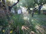 Fotovijest: Jesenje jutro u Belom Manastiru