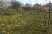 Fotovijest: Maslačci i tratinčice u Belom Manastiru