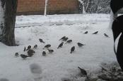 Fotovijest: Snijeg i ptice